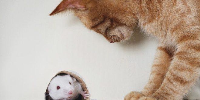 Китайские хирурги пересадили подопытной мыши клетки головного мозга и обнаружили, что операция избавила грызуна от некоторых страхов.